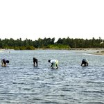 Clam digging with the locals