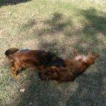 equesti o miei cuccioli che giocano liberi in giardino!! la felicità !!!!