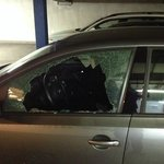 Two broken into cars - notice the white Volvo in the back also