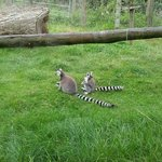 Lemur enclosure