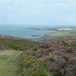 One of the many Coastal Walks