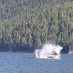 A whale of a splash !
