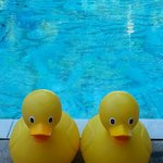 Rubber Duckies at the pool keep you afloat & happy