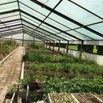 Huerta organica del retreat