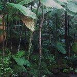 Végétation à côté du Centre où débute la visite d'El Yunque