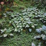 Une abondante végétation près du Centre où débute la visite d'El Yunque
