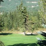 eagle in tree;  golf course view from room