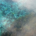 Amazing life under water at Pupu Springs