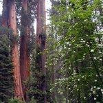 King's Cyn National Park, California. Redwood Canyon Trail