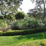 Courtyard garden2
