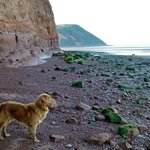On the beach with Toller Dog Ambassador Zorro