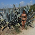 nell'Agave