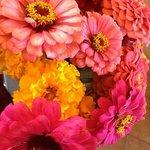 Las flores del jardin que embellecian nuestra habitacion