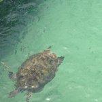 Akumal, Mexico - tortuga marina