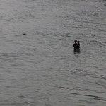 Seal swimming close to shore