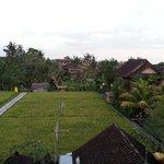 rice fields view