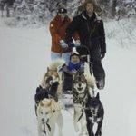 Paseo en el trineo de perros Husky