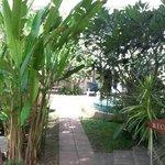 nice entrance garden