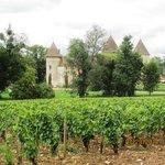 Vineyards of Chateau de Savigny