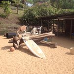 Here is a fun place to take photos.  The goats like to climb on the surfboards