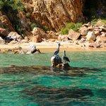 Praia - Los Cabos.
