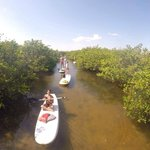 mangrove trails