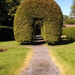 Rows of Arched Hedges