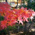 紅葉の美しい庭園