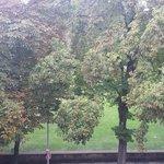 Vue sur les arbres du parc depuis la chambre