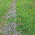 weedy paths