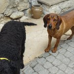 La gentille chienne