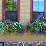 Those beautiful window boxes!