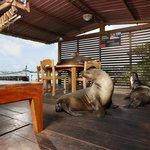 Sea Lions at our Ocean View Restaurant. Aventura Lodge.