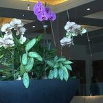 The lobby is filled with beautiful orchids