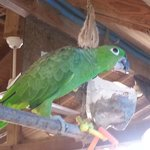 One of the parrots that call WBL home