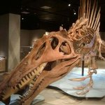 Spinosaurus model