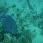 One of many fish we saw