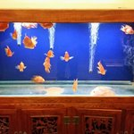 Fish tank in foyer.