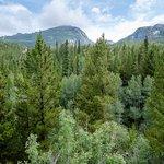 view from Alberta Falls trail