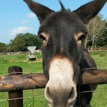 A donkey having a look at our picnic,at the hope nature centre :)!