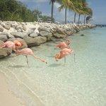 praia do flamingo
