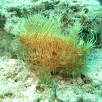 Hairy frogfish!