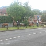 free roaming horses in front of the villa school