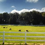 Pasture in front of the Inn