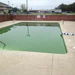 Green pool.  Lovely, I'm sure the health department would like to see this.