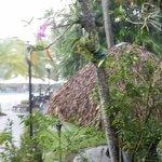 ruisende regen in de binnentuin - altijd maar kort