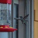 Hummingbirds outside the breakfast nook