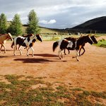 Horses going back to pasture for the day