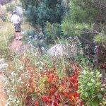 Foto de Cache la Poudre Wilderness Area