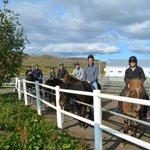 Icelandic Horseback Riding